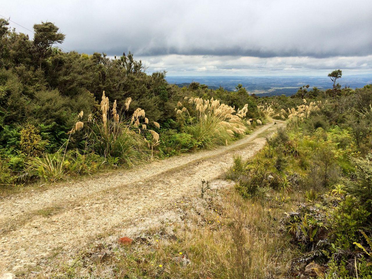 Rangitoto Walking tracks NFRT
