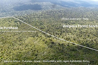 Wekaweka from the air. Photo provided by Stephen King