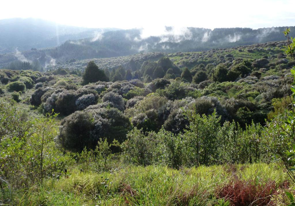 McGregor Reserve planting 017