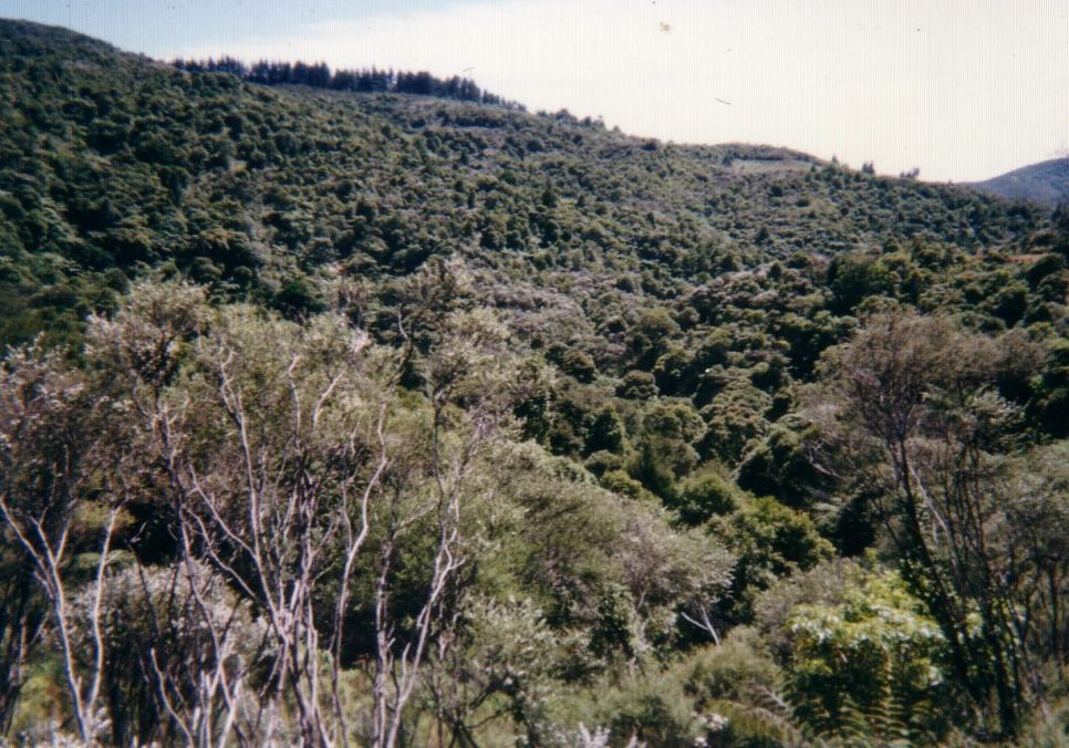 Puhoi Far North
